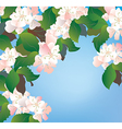 Apple blossom background floral vector