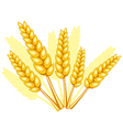 Wheat spikelets vector