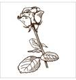 Rose flower isolated on white vector