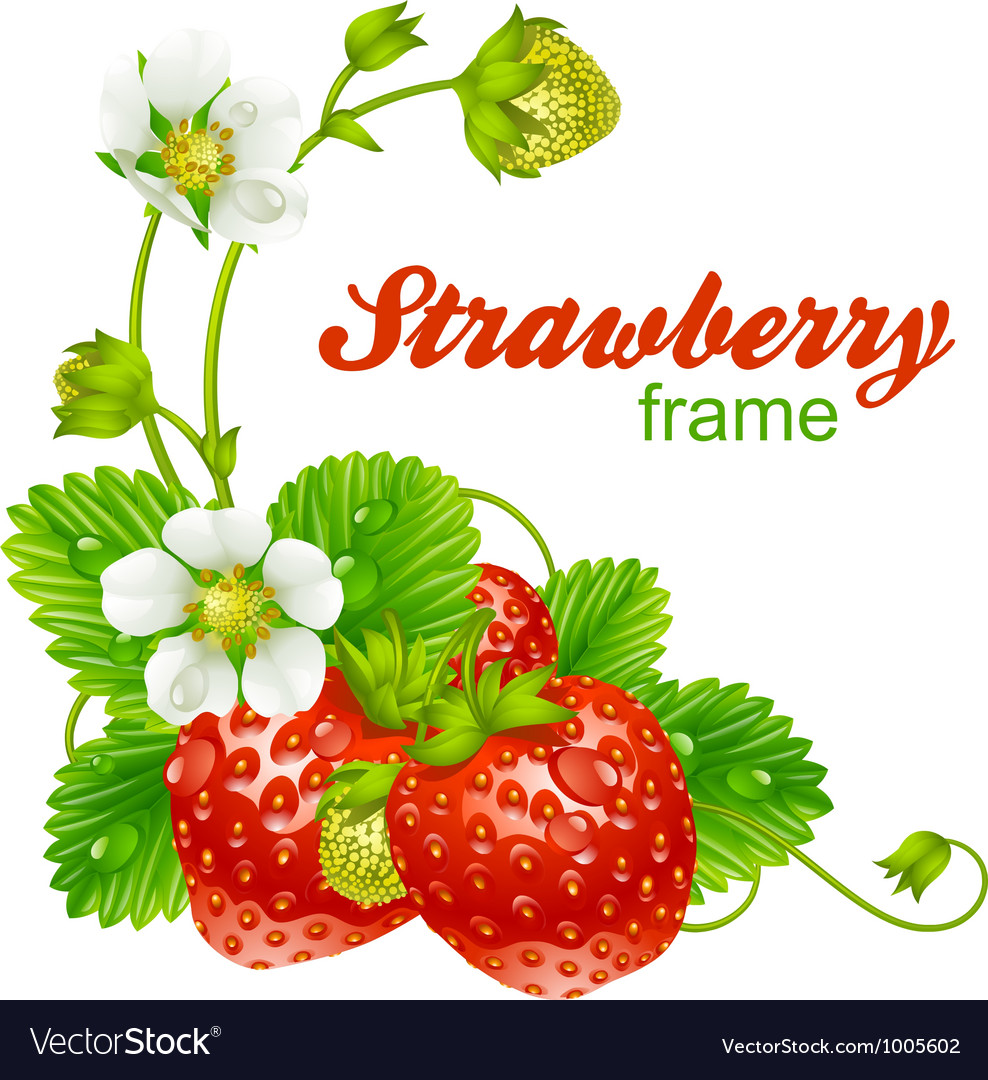 Strawberry frame vector | Price: 3 Credit (USD $3)