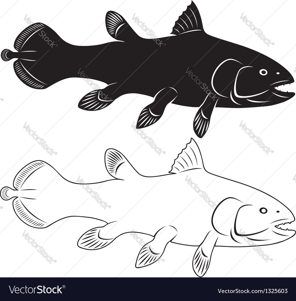 Coelacanth vector