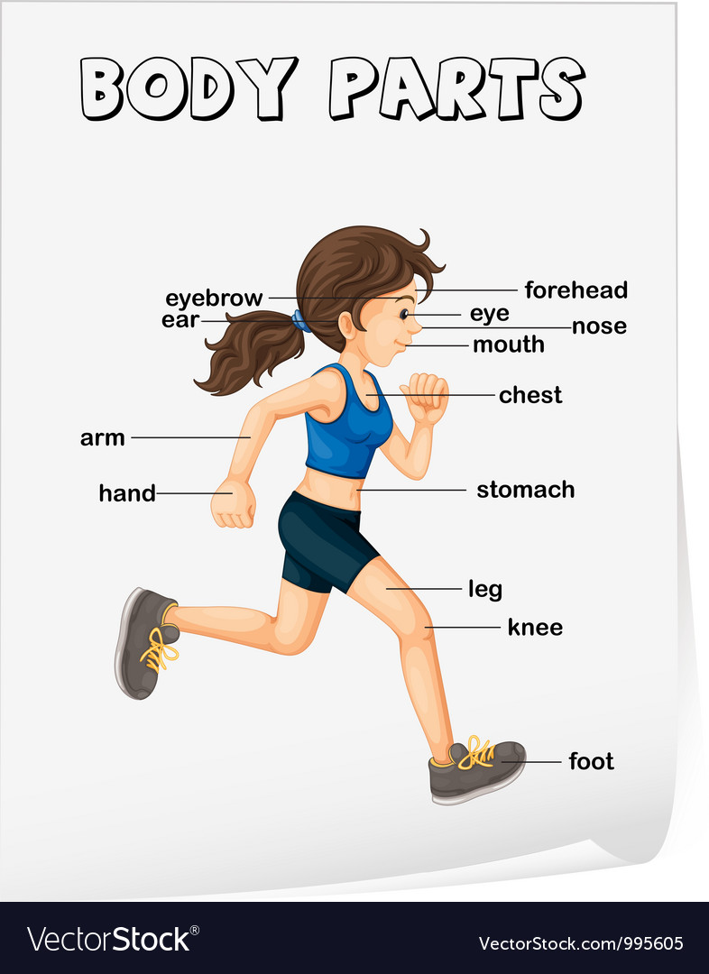 Body parts diagram poster vector | Price: 3 Credit (USD $3)