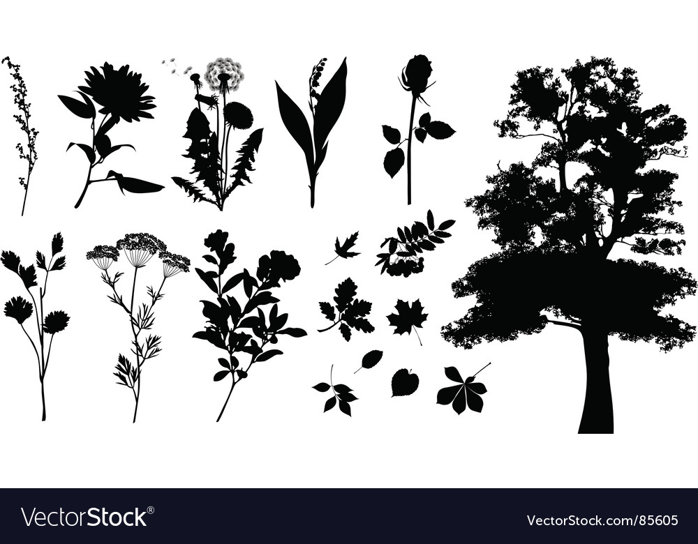 Plants silhouettes vector | Price: 1 Credit (USD $1)