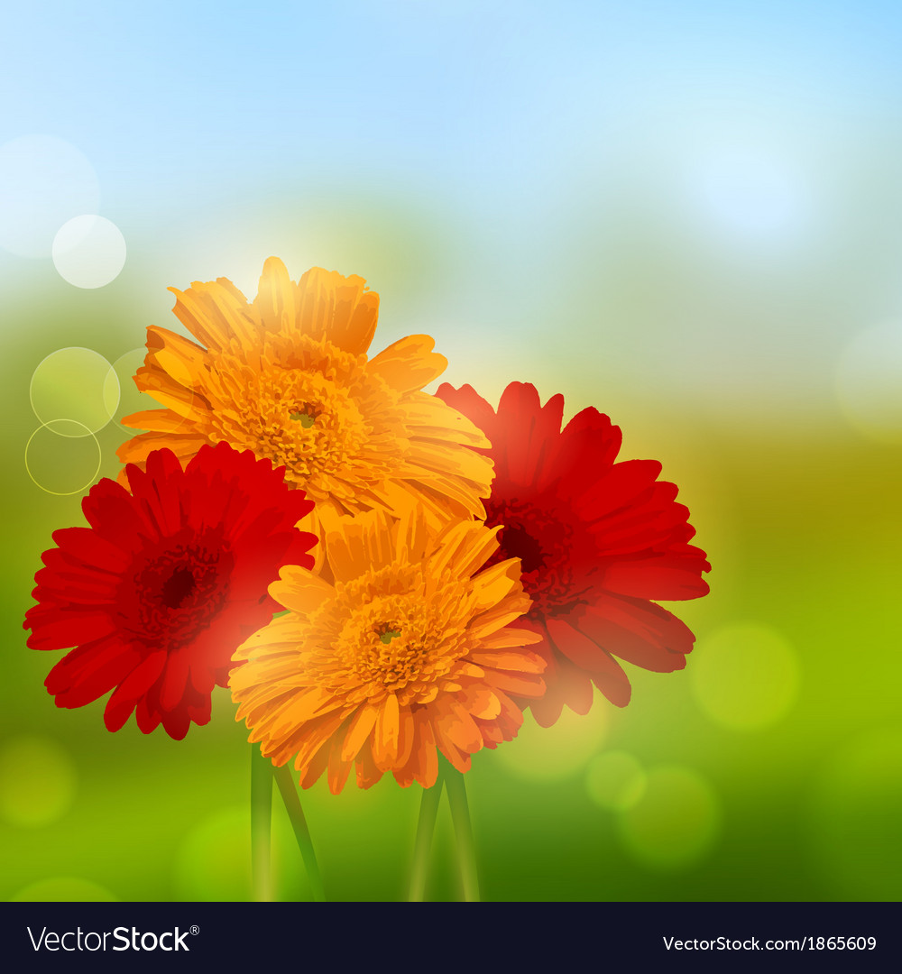 Gerbera flower background vector | Price: 1 Credit (USD $1)