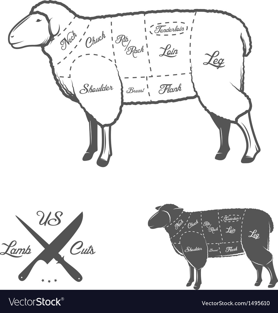 American cuts of lamb or mutton diagram vector | Price: 1 Credit (USD $1)