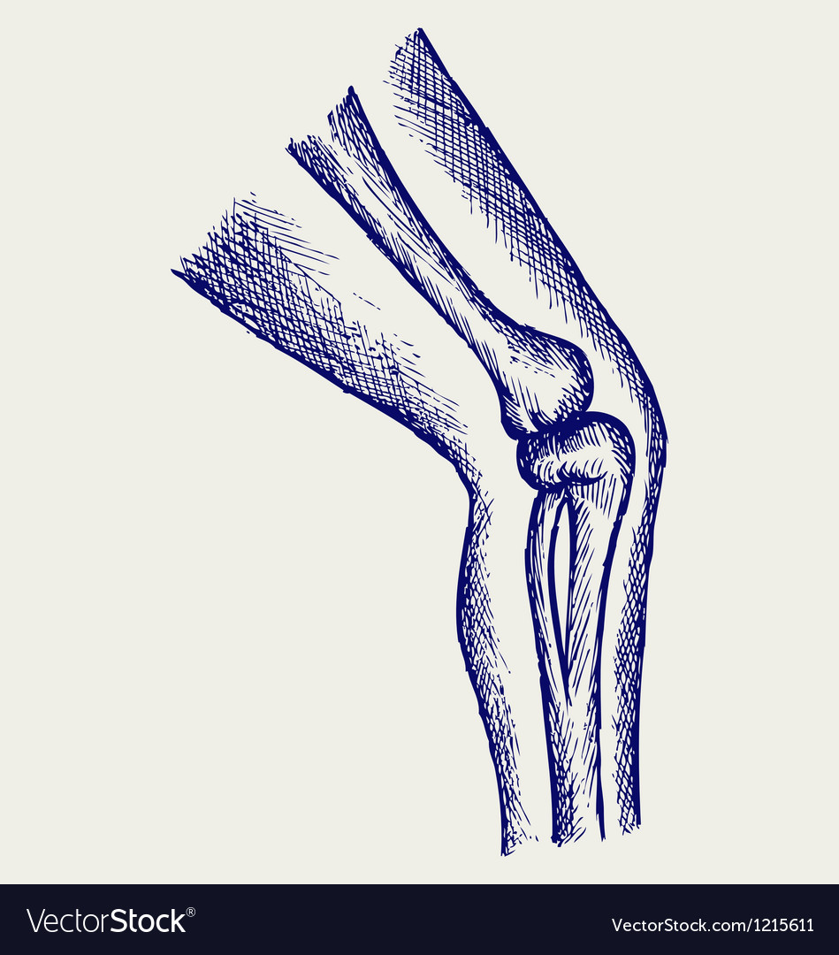 Human leg bones vector | Price: 1 Credit (USD $1)