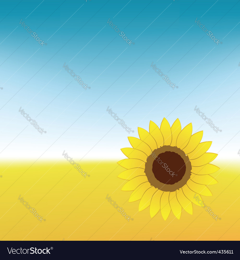 Sunflower on summer field vector | Price: 1 Credit (USD $1)