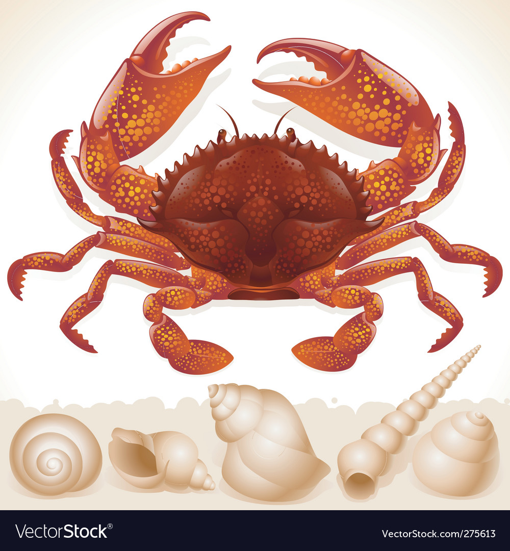 Red crab and few seashells vector | Price: 3 Credit (USD $3)