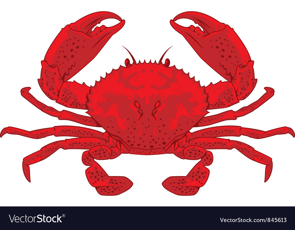 Red crab vector | Price: 3 Credit (USD $3)