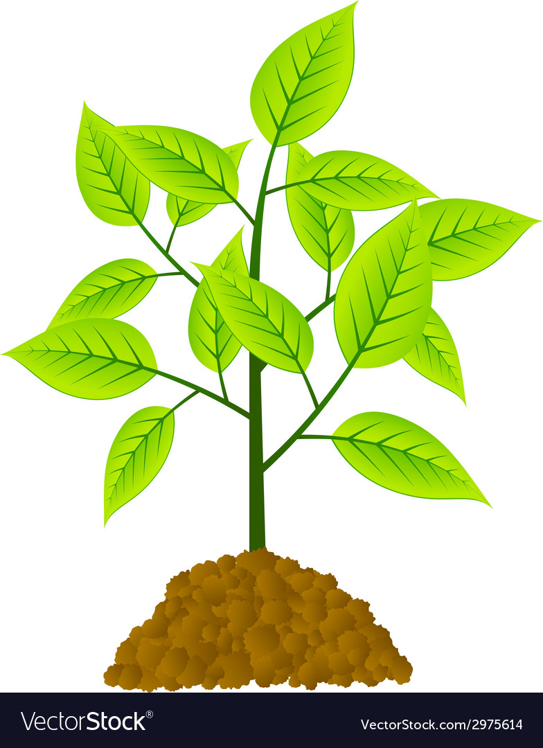 Young tree vector | Price: 1 Credit (USD $1)