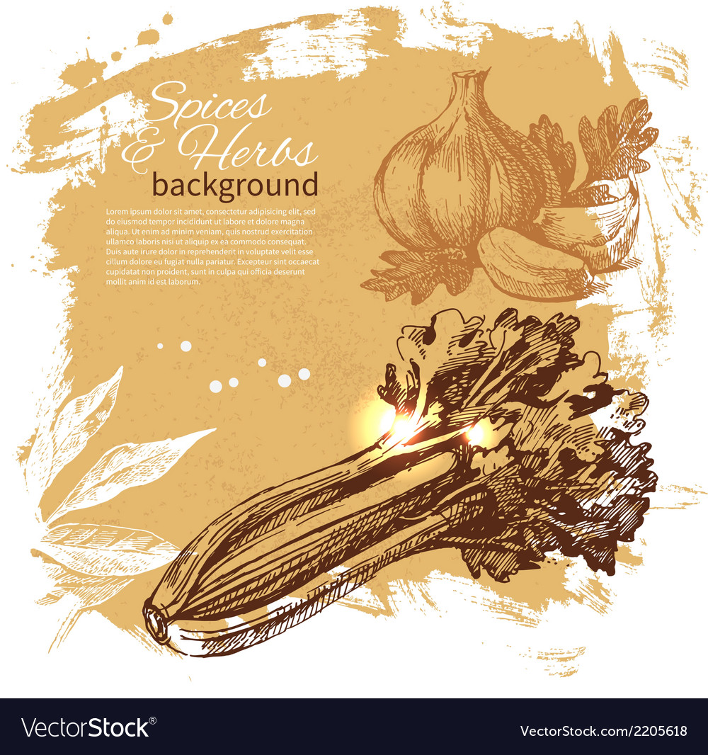 Vintage background with hand drawn sketch herbs vector | Price: 1 Credit (USD $1)