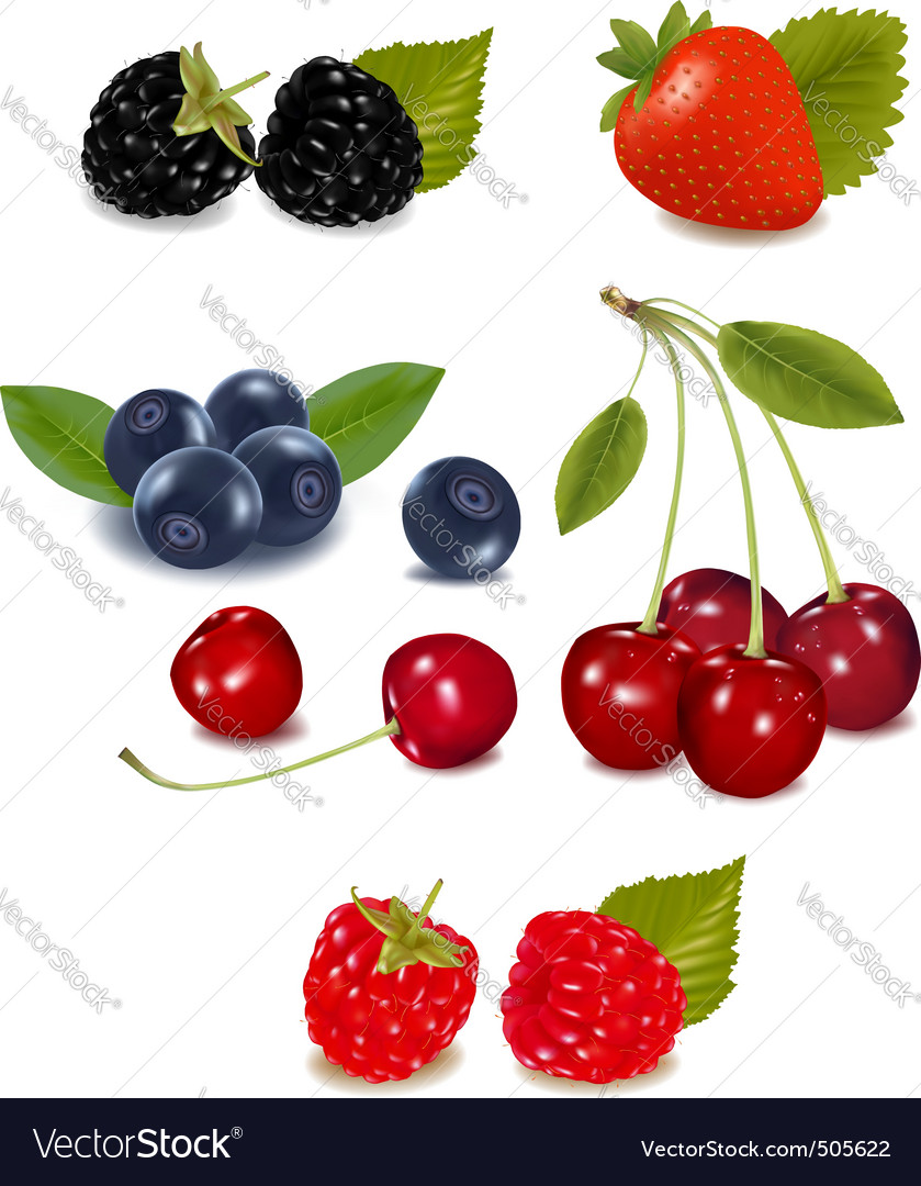 Group of berries and cherries vector | Price: 3 Credit (USD $3)