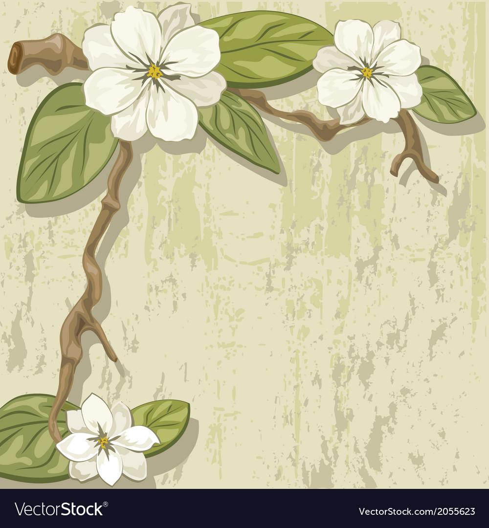 White magnolia vector | Price: 1 Credit (USD $1)