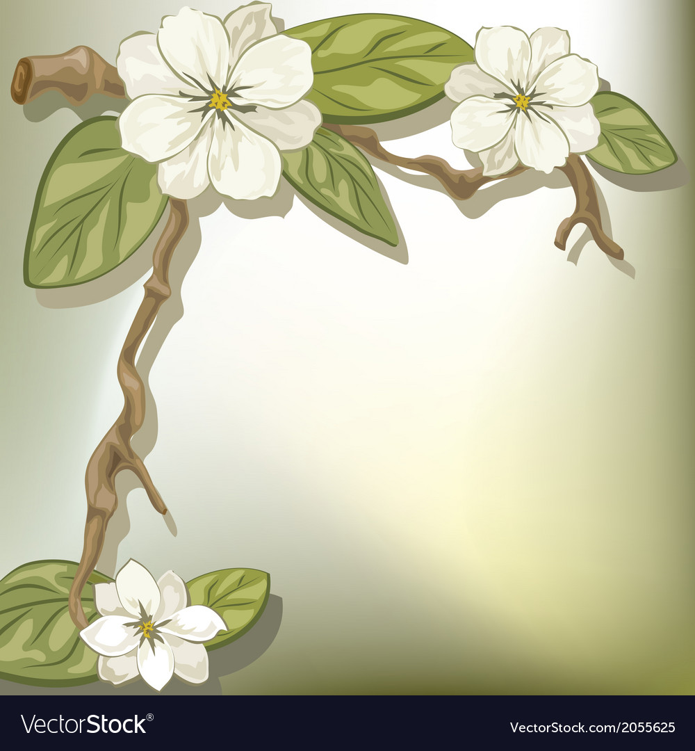 White flowers vector | Price: 1 Credit (USD $1)