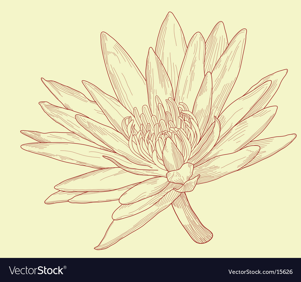 Lily sketch vector | Price: 1 Credit (USD $1)