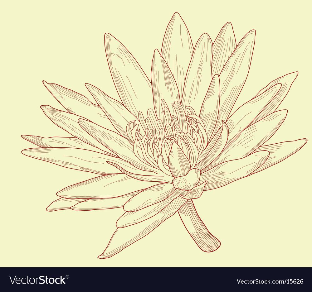 Lily sketch vector | Price: 1 Credit (USD $1)