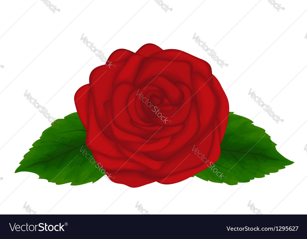 Red rose with green leaves isolated on white backg vector | Price: 1 Credit (USD $1)
