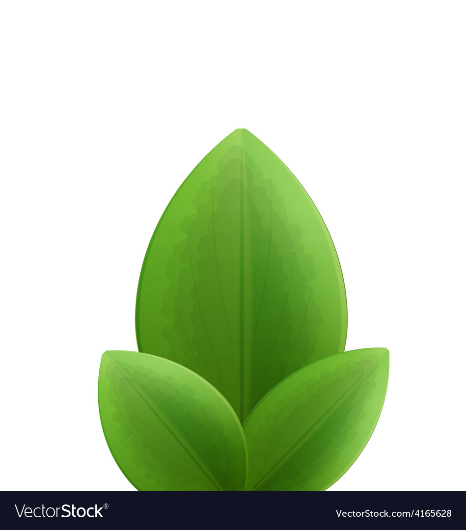 Plant three realistic green leaves isolated on vector | Price: 1 Credit (USD $1)