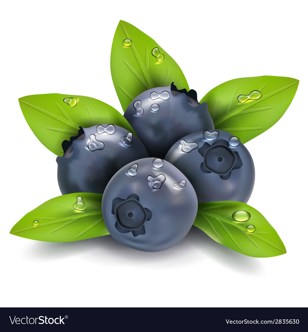 Blueberry vector   Price: 1 Credit (USD $1)