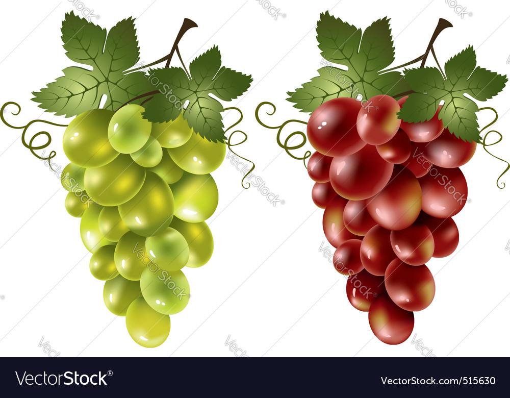 Red and green grape vector | Price: 3 Credit (USD $3)