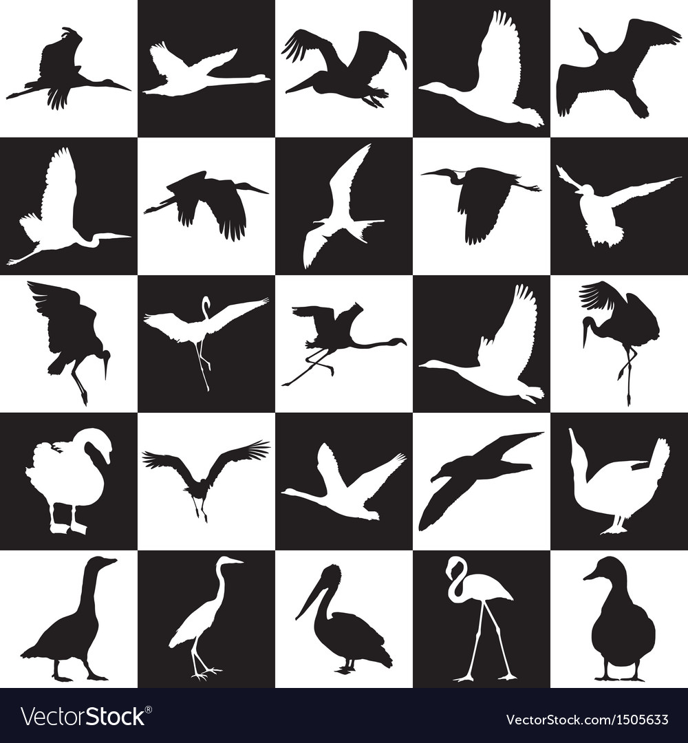 Black and white background with aquatic birds vector | Price: 1 Credit (USD $1)