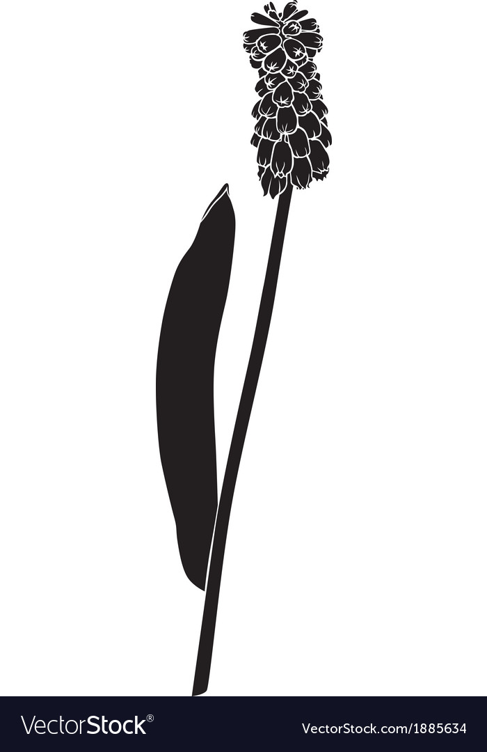 Flower silhouette real vector | Price: 1 Credit (USD $1)