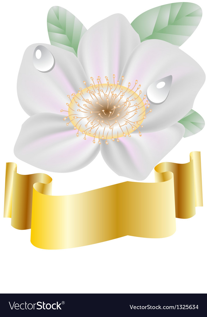 Spring flower and gold ribbon vector   Price: 1 Credit (USD $1)