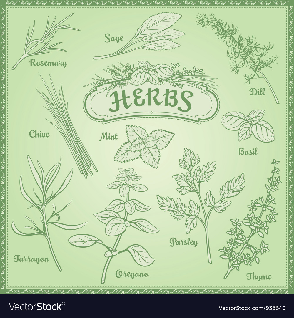 Outline herbs set vector | Price: 1 Credit (USD $1)