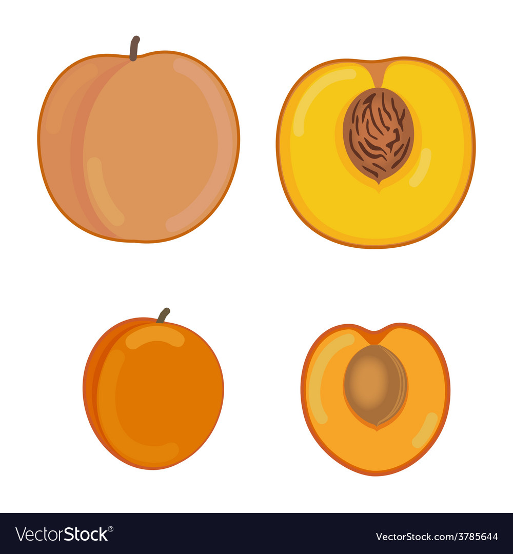 Peach and apricot in a section vector | Price: 1 Credit (USD $1)