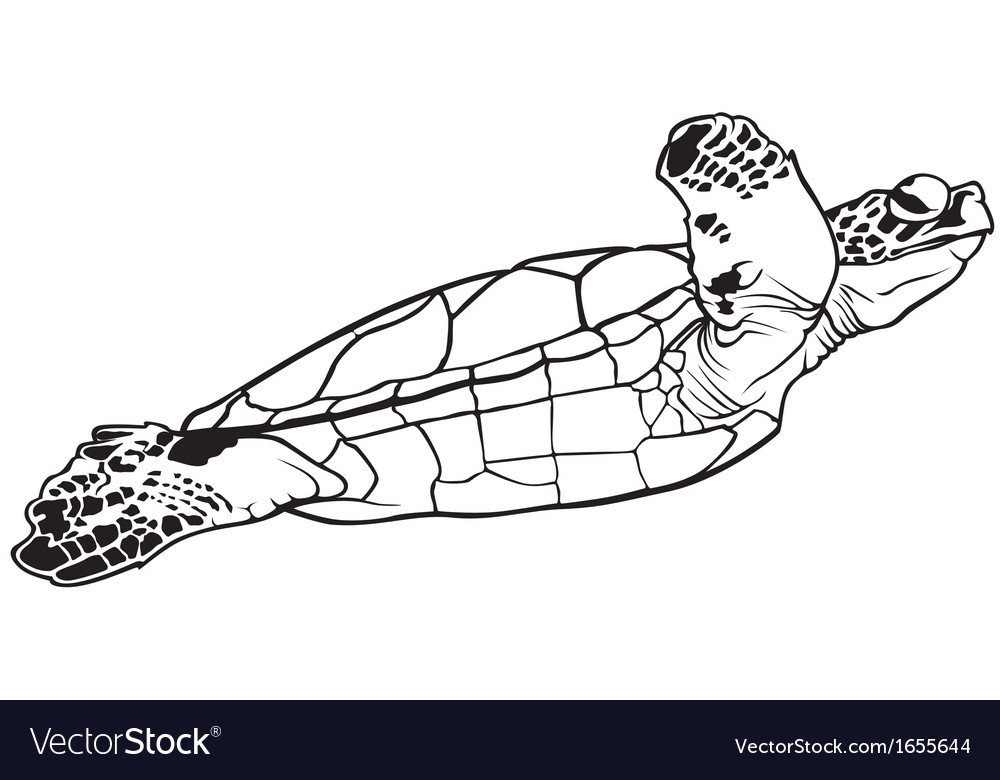 Sea turtle vector | Price: 1 Credit (USD $1)