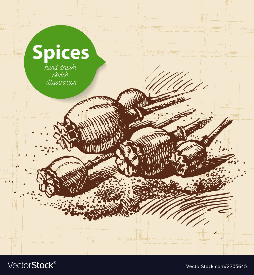 Kitchen herbs and spices vintage background with vector | Price: 1 Credit (USD $1)