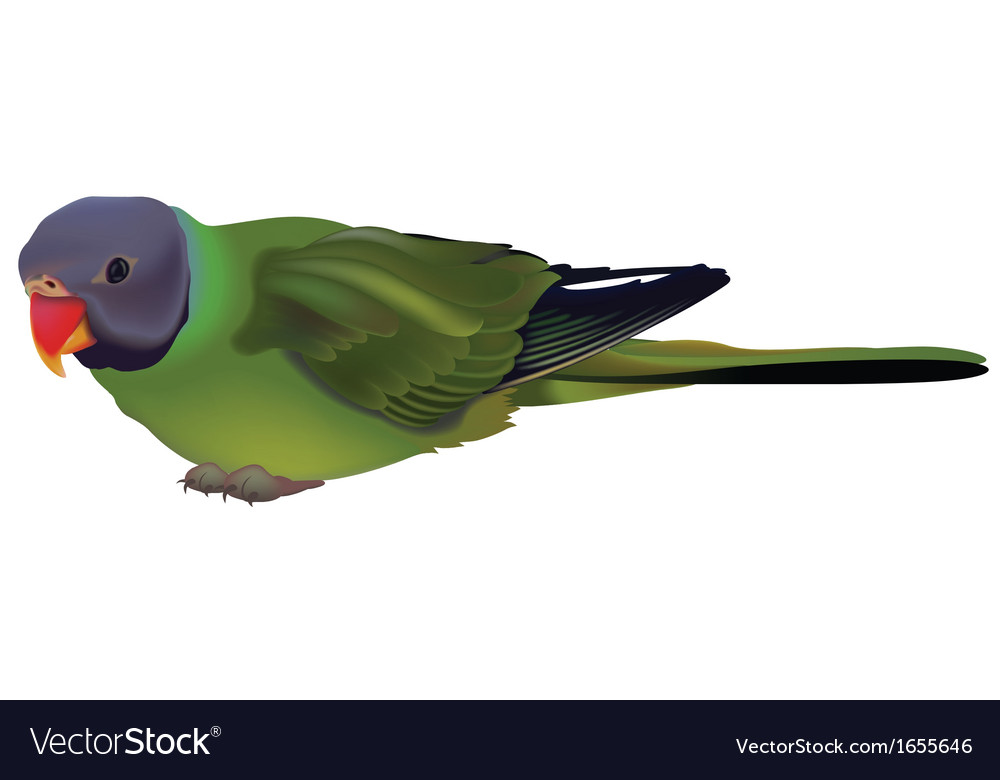 Green parrot vector | Price: 1 Credit (USD $1)