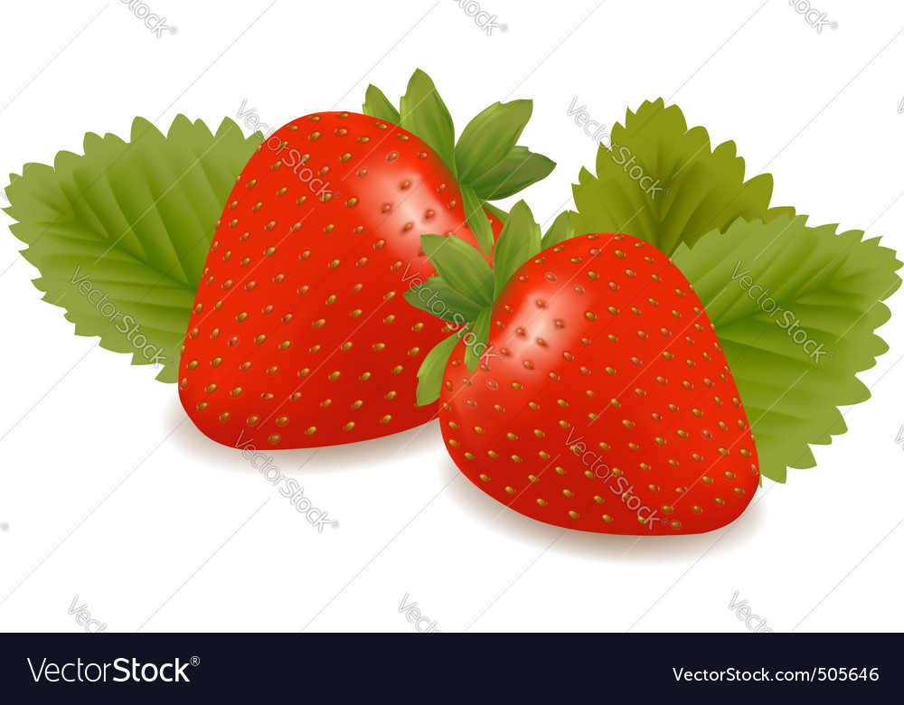 Two strawberries with three leaves vector | Price: 1 Credit (USD $1)