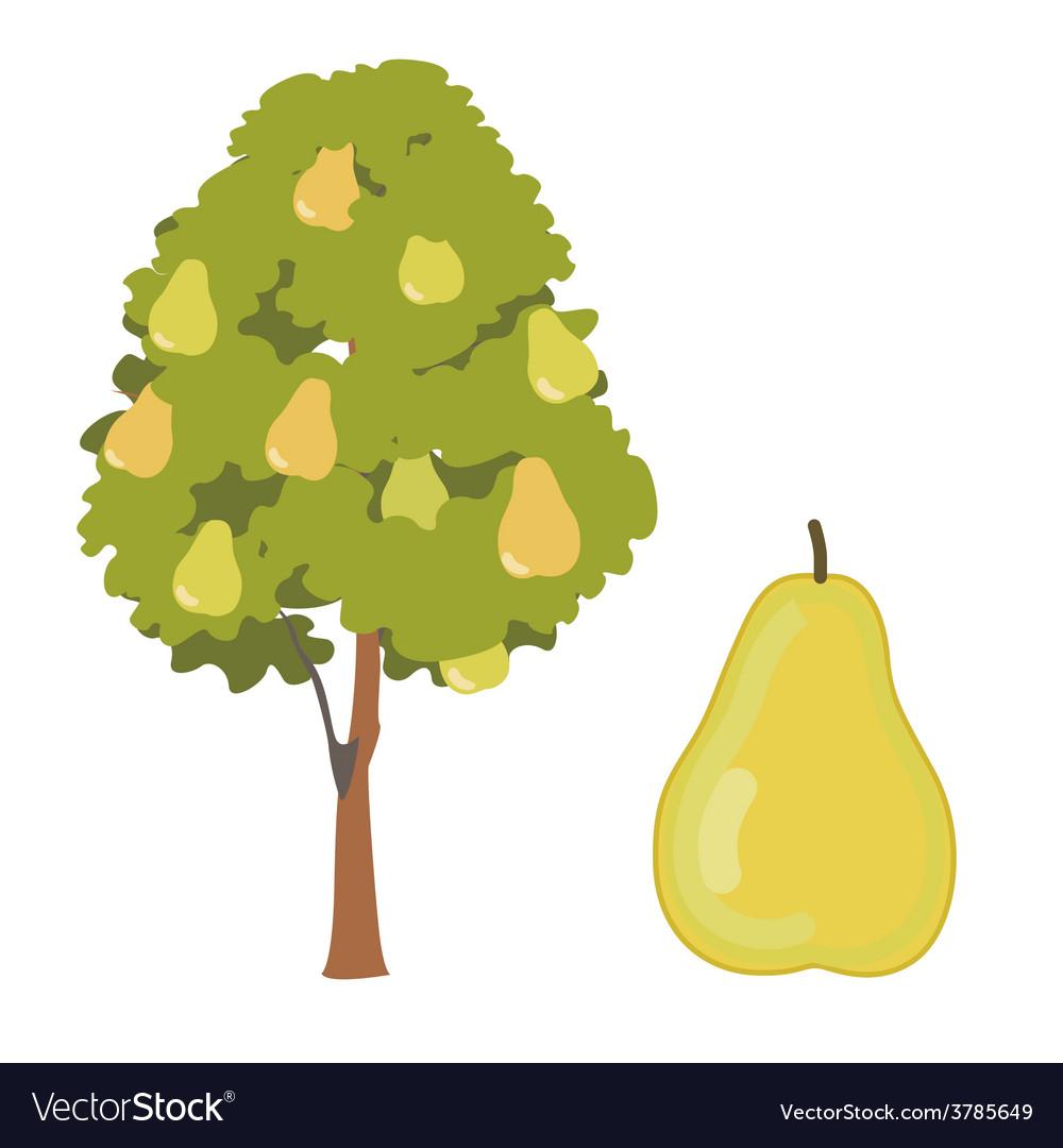 Pear tree vector | Price: 1 Credit (USD $1)