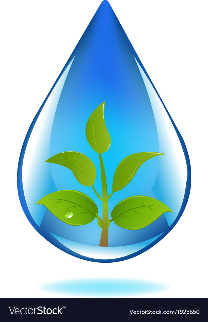 Drop of water with sprout vector | Price: 1 Credit (USD $1)