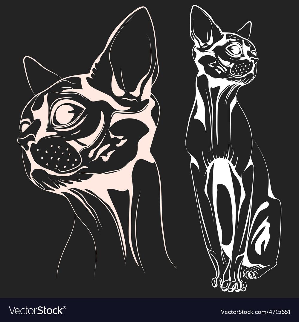 Cat1 vector   Price: 1 Credit (USD $1)