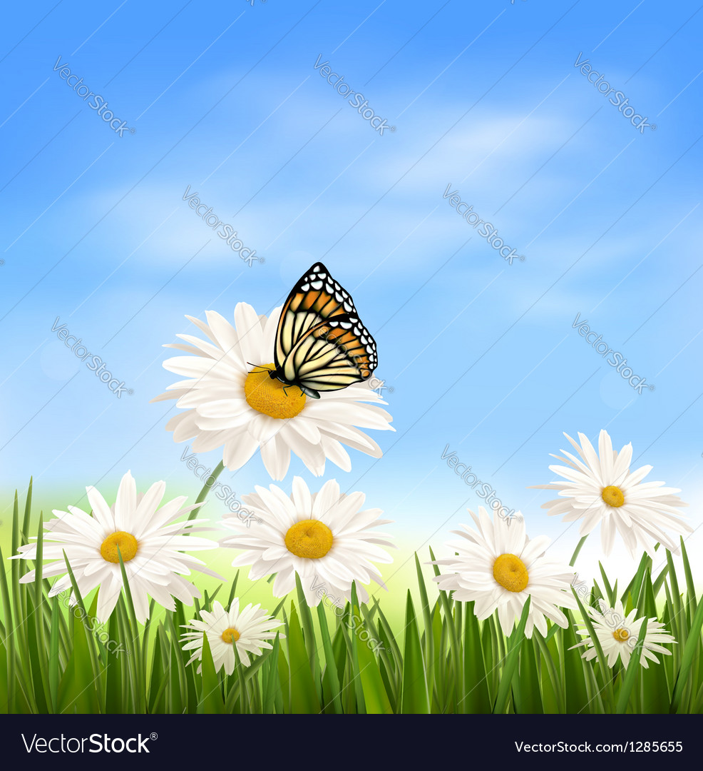 Nature background with green grass and butterfly vector | Price: 3 Credit (USD $3)