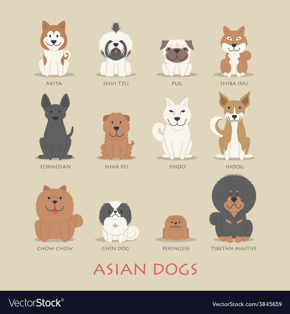 Set of asian dogs vector | Price: 1 Credit (USD $1)