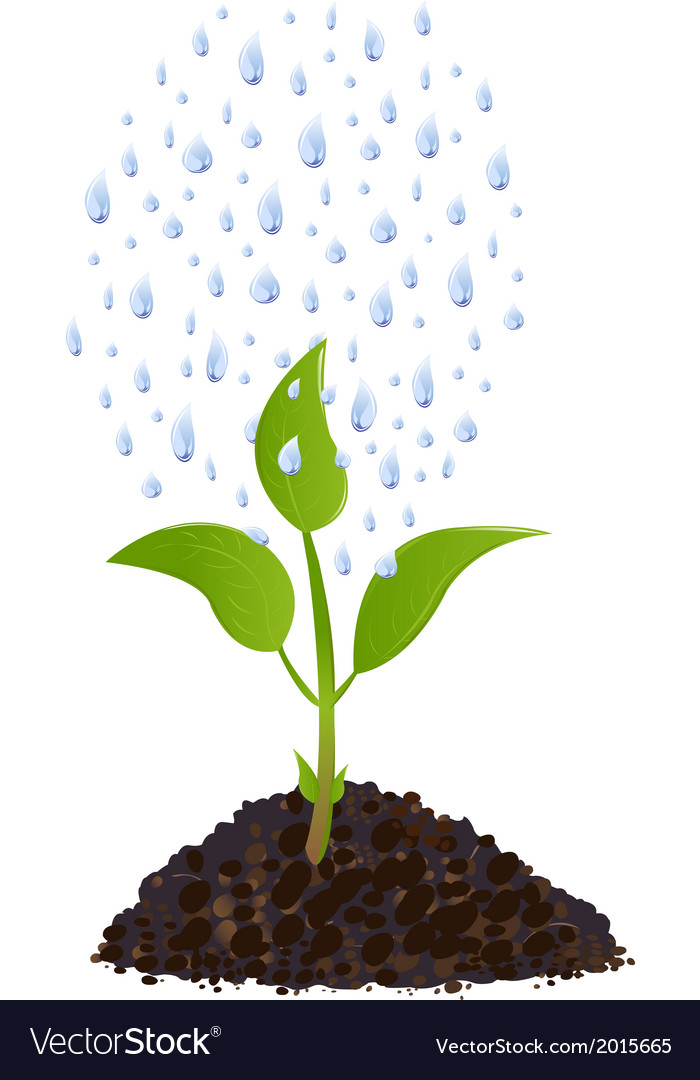 Green young plant with rain drops vector | Price: 1 Credit (USD $1)