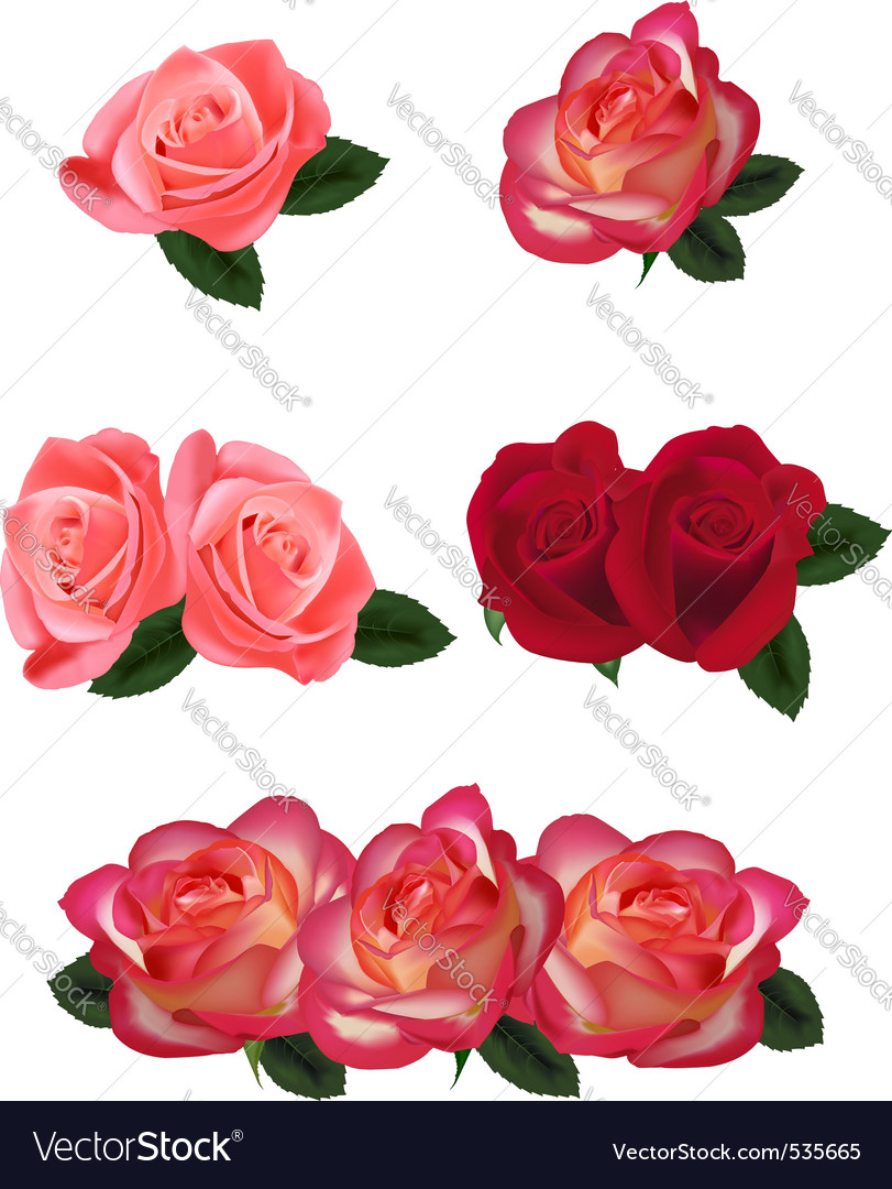 Set of a beautiful roses vector | Price: 3 Credit (USD $3)