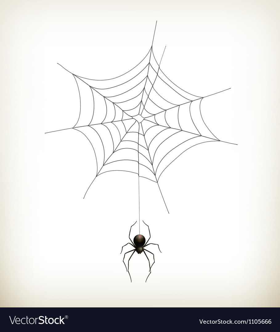 Spider and web vector | Price: 1 Credit (USD $1)