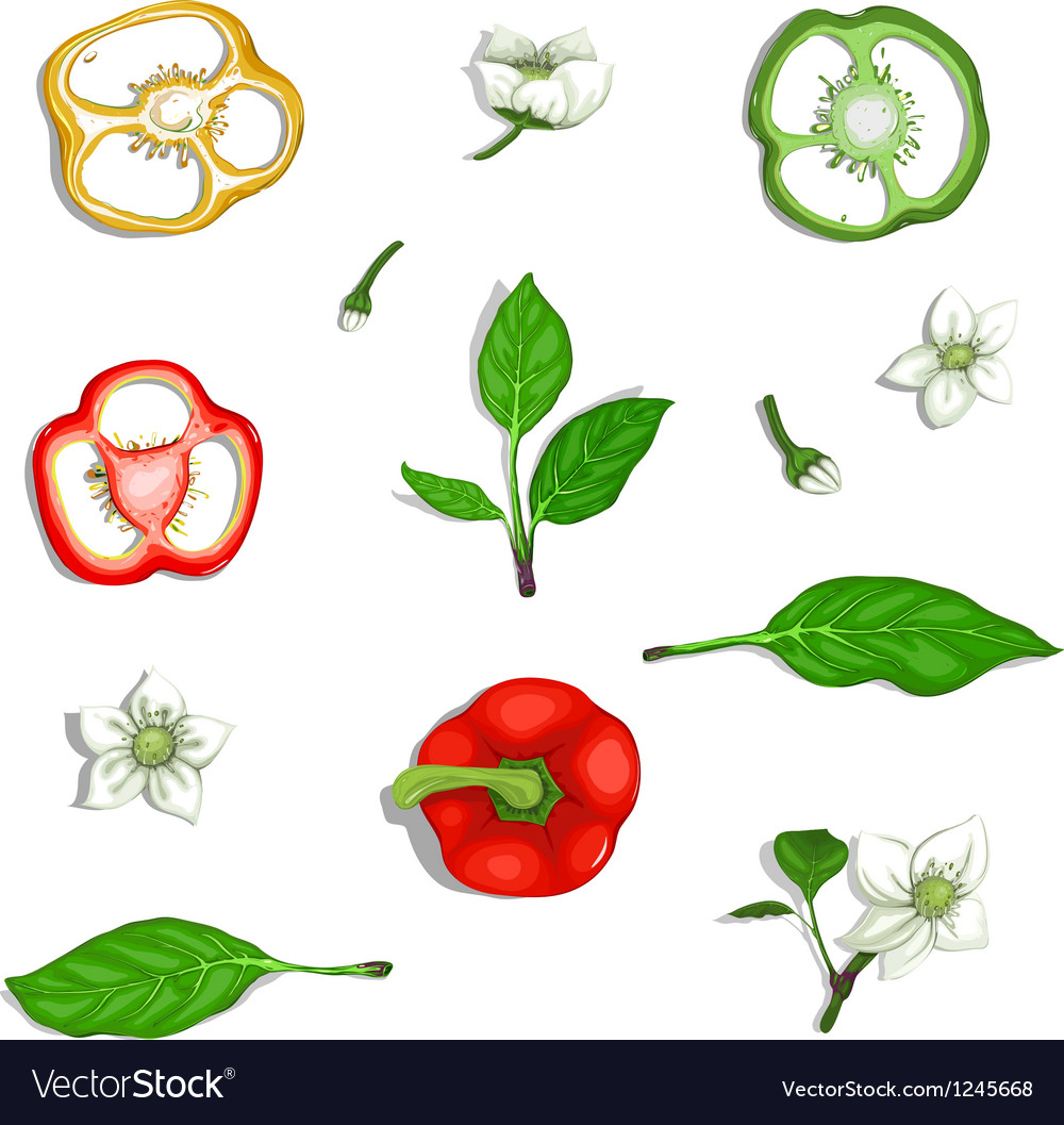 Paprika sweet pepper elements collection vector | Price: 1 Credit (USD $1)