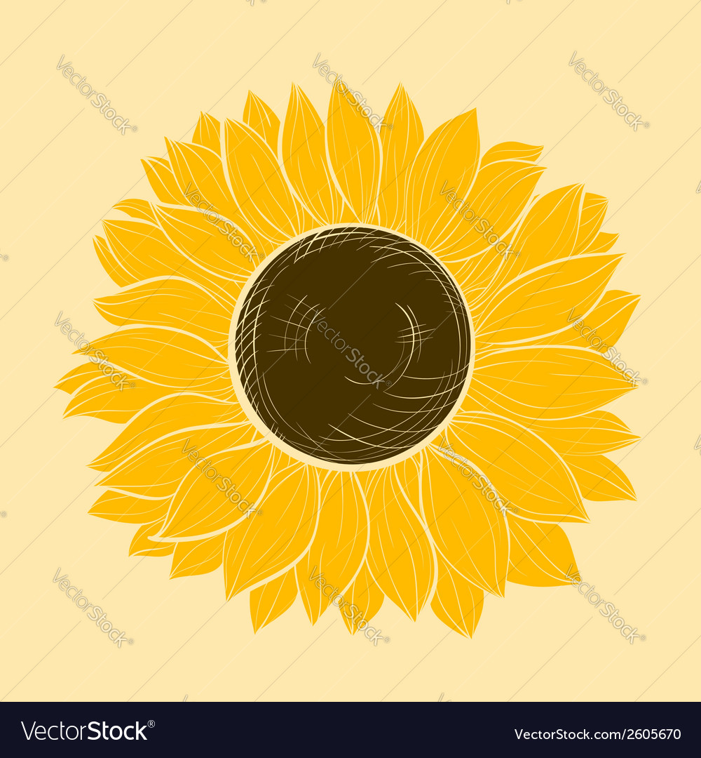 Beautiful sunflower isolated vector | Price: 1 Credit (USD $1)