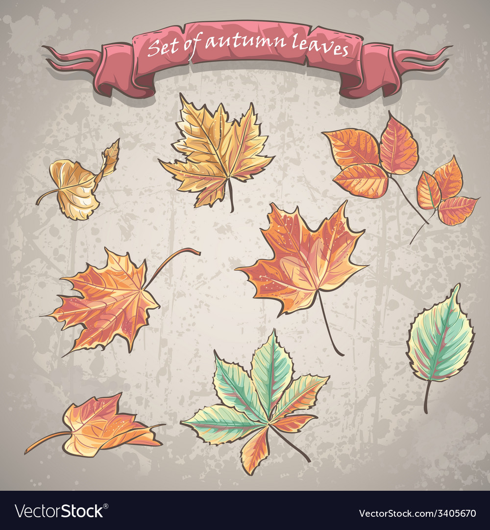 Set of autumn leaves of maple chestnut and other vector | Price: 1 Credit (USD $1)