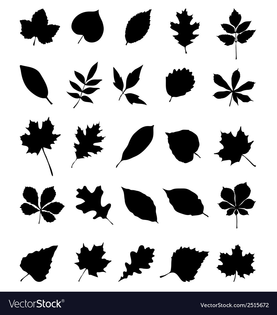 Foliage 2 vector | Price: 1 Credit (USD $1)