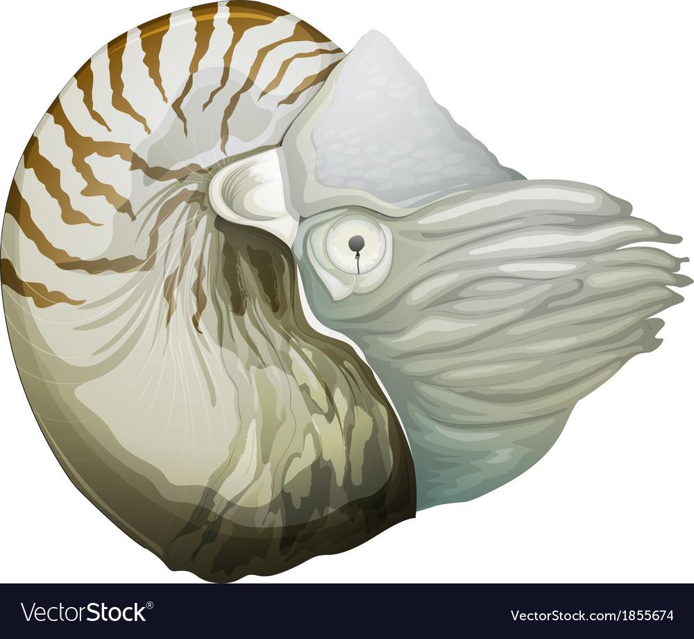 Nautilus shell vector | Price: 3 Credit (USD $3)