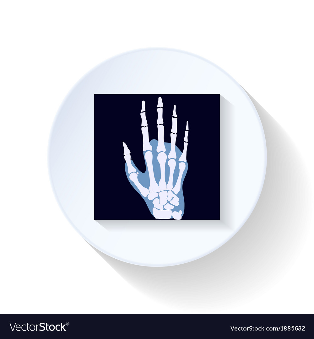 X-ray photograph flat icon vector | Price: 1 Credit (USD $1)