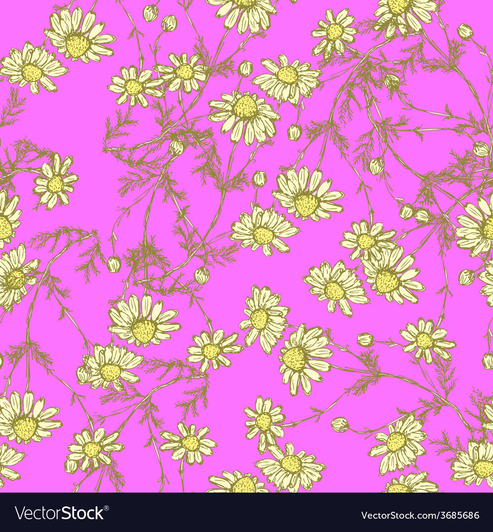 Daisy flower in sketch style vector | Price: 1 Credit (USD $1)
