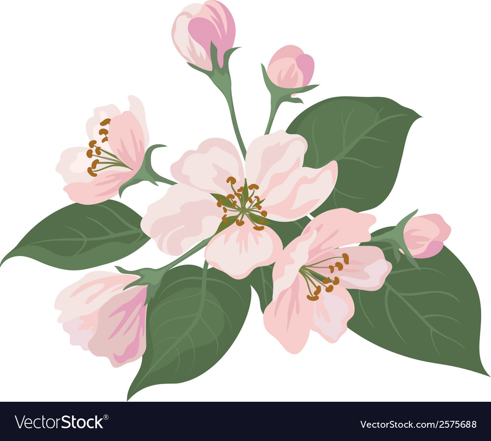 Apple tree flowers and green leaves vector | Price: 1 Credit (USD $1)