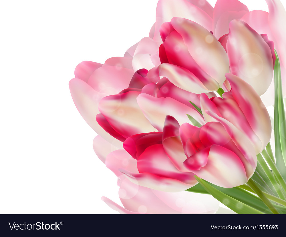 Fresh spring tulip flowers on white eps 10 vector | Price: 1 Credit (USD $1)